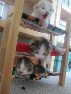 """WOAH, being on the top bunk is kinda scary when you're this little!"" 
