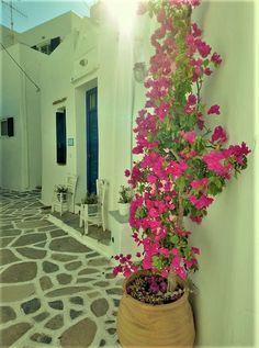 Paros Greece, Paros Island, Holiday 2014, Plants, Beautiful, Lava, Plant, Planets