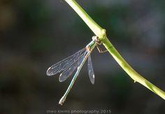 dragon fly | www.theo-klems.de