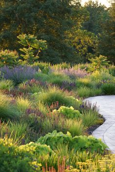 Not a natural meadow, but the grasses turn this perennial planting into dynamic stylized version