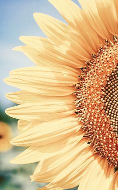 Wallpaper Nature Flowers, Flower Iphone Wallpaper, Sunflower Wallpaper, Iphone Background Wallpaper, Fall Wallpaper, Tumblr Wallpaper, Phone Backgrounds, Aesthetic Desktop Wallpaper, Cute Patterns Wallpaper