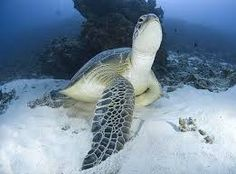 Image result for underwater photography