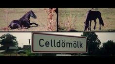 Image Film, Horses, Animals, Animales, Animaux, Horse, Words, Animal, Animais