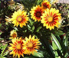 Health Diary, Garden, Plants, Garten, Lawn And Garden, Gardens, Plant, Gardening, Outdoor