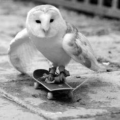 Skateboarding. S)