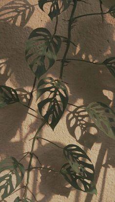 ıllıllı 𝒫𝒾𝓃𝓉𝑒𝓇𝑒𝓈𝓉: 𝓂𝓎𝓃𝓃𝓈𝒶𝓃🎈 ıllıllı – Best Home Plants Aesthetic Pastel Wallpaper, Aesthetic Backgrounds, Aesthetic Wallpapers, Photo Wall Collage, Picture Wall, Cute Wallpapers, Wallpaper Backgrounds, Plant Wallpaper, Plant Aesthetic