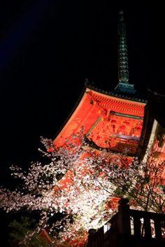 清水寺 桜 三重塔 ライトアップ 満開 京都 春