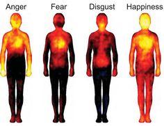 Αλέξης Φωτόπουλος Όταν μέσα μας φωλιάζει ο φόβος και όλα τα αρνητικά συναισθήματα που πηγάζουν από αυτόν, τότε η ενέργεια που κυκλοφορεί σε μεσημβρινούς (ποταμούς ενέργειας) μέσα μας μπλοκάρεται με αποτέλεσμα το κάθε όργανο που τροφοδοτείται ενέργεια από τον μεσημβρινό που έχει το μπλοκάρισμα να χάνει την ενέργεια του και να ασθενεί (α-σθένεια έλλειψη σθένους, …