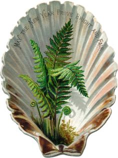 Victorian Shell and Fern