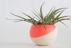 Melon Air Plant Pot with Air Plant by BirdAndFeatherCo on Etsy, $12.00