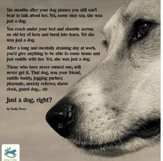 A nice quote to send to someone who is grieving the loss of their dog.