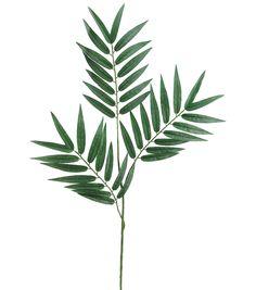 28'' Phoenix Palm Branch x3 with 39 Lvs.