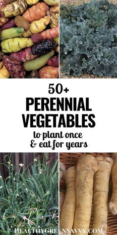 Adding perennial vegetables to your garden or landscape means you can plant once and harvest delicious (and unusual) veggies for years to come, There are dozens of plants to choose from, many cold hardy to zone or even colder. Perennial Vegetables, Growing Vegetables, Perennial Plant, Gardening Vegetables, Organic Gardening, Gardening Tips, Gardening Books, Container Gardening, Alpine Plants