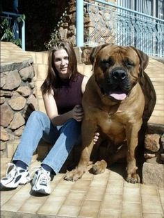 ONE HUGE DOG