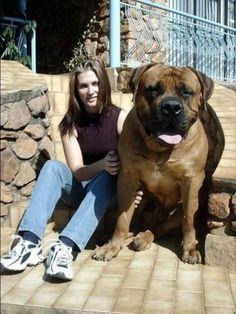 ONE HUGE DOG