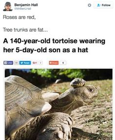 18 'Roses Are Red' Tweets That Are Unbelievably Funny - BlazePress
