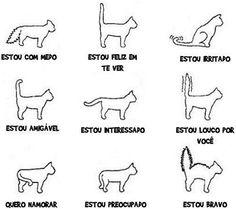 banheiro reservado gatos - Pesquisa Google