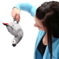 5 Ways To Play With Your African Grey