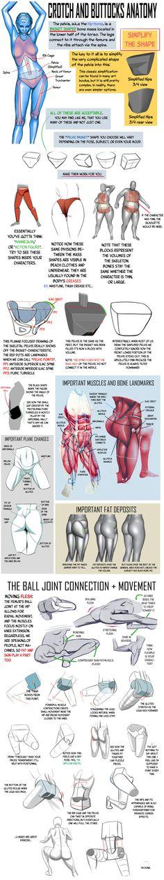 Crotch and Buttocks Anatomy by NemoNova on DeviantArt