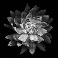 Flourish-Kate Scott