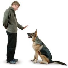 #Prepper - Training Your Dog For Survival