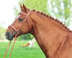 ^^ and this bridle