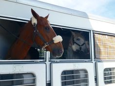 How to… http://www.proequinegrooms.com/index.php/tips/equipment-and-tack/trailering-somewhere-reduce-travel-stress-on-your-horse-with-the/