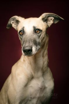 PHOTO BY ELKE  VOGELSANG........PARTAGE OF WIESELBLITZ......ON FACEBOOK............