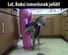 Very interesting post: Funny Dogs - 31 Pictures. Also dompiсt.сom lot of interesting things on Funny Dog. Funny Fails, Funny Dogs, Funny Memes, Animal Memes, Funny Animals, Weird Pictures, Daily Funny, Jokes Quotes, Funny Photos