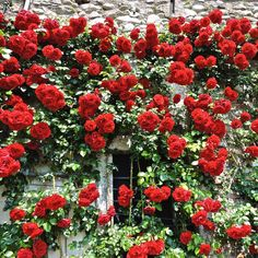 🌹 to the beautiful rose filled walls of Villa Carlotta on Lake Como, Italy Como Italy, Lake Como, Tree Toppers, Beautiful Roses, Time Travel, Travel Photos, Greenery, Thursday, Villa