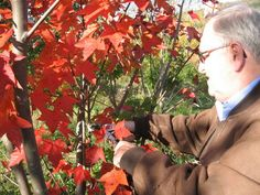 Pruning for People with Hand Mobility Problems