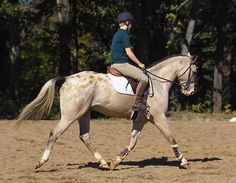 Perfecting the Posting Trot Fine-tune your position at the rising trot, and fix six major flaws for both hunt seat and dressage riders.