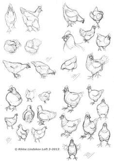 Draw Pattern - Chicken Sketches by Gwennafran. on - CoDesign Magazine Chicken Tattoo, Chicken Drawing, Chicken Painting, Chicken Art, Animal Sketches, Animal Drawings, Drawing Sketches, Art Drawings, Ostern Cartoon