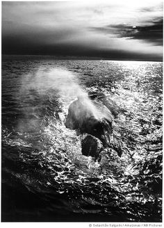 Sebastiao Salgado: 'When you have them in front of you, you do feel the power of life.'