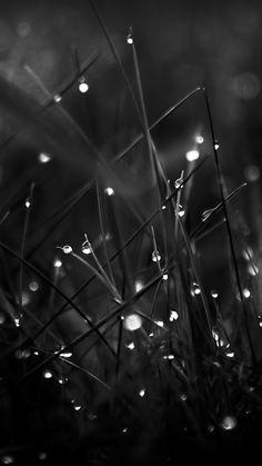 Dark Dew Morning Leafy Grass Landscape iPhone 6 wallpaper
