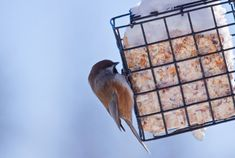 Learn how to make your own suet bird food for the winter months. Suet is essentially a solidified mix of fats, which birds eat to stay warm. Particularly in winter, suet is a valuable bird food. Homemade Suet Recipe, Suet Cake Recipe, Homemade Dog Food, Beef Suet Recipe, Healthy Recipes, Dog Food Recipes, Cake Recipes, Bird Suet, Bird Feeders