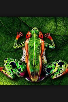 Frog or body?