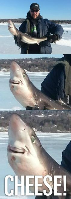Shark loves being caught!