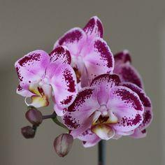 Consejos para iniciarse en el cultivo y cuidado de orquídeas
