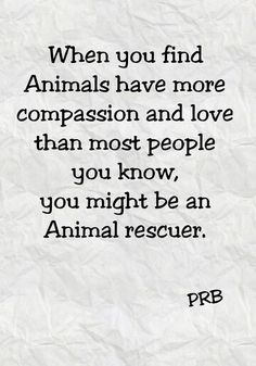 Animal rescuers have big hearts!