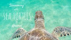 A handy guide on how to snorkel with sea turtles in Akumal, Mexico