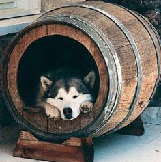 Oh my GODDD. I want this so badly now. For my Vineyard themed kitchen, a wine barrel.. Perfect place for a sleepy spot for my future pup. <3