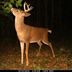 Deer photos from the Trailcampro 2020 Photo contest Whitetail Deer Pictures, Deer Photos, Big Buck Pictures, Game Trail, Trail Camera, Camera Reviews, Photo Contest, Kangaroo, Animals