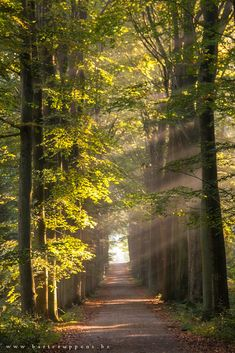 16 Sunlight in the forest by Bart Ceuppens on 500px