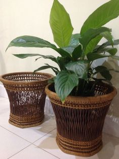 2 matching plant holders in two tone Wicker/rattan perfect for that bohemian home look Please see pictures for condition as one of the planters have some small damage Measurements: tall wide (top) (bottom) Wicker Planter, Planters, Bamboo Canes, Bohemian House, Cactus Print, Hanging Pictures, Candle Lanterns, Plant Holders, Potted Plants