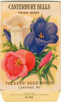 Vintage Flower Seed Packet Tuckers Seed House Lithograph CANTERBURRY BELLS Carthage, Missouri