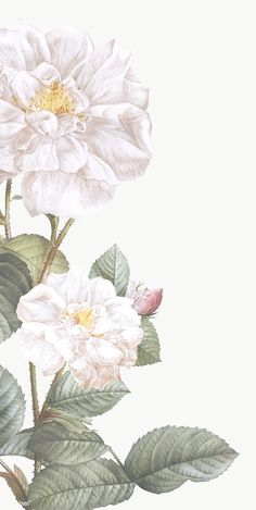 Floral pattern in gouache by Lydia Carns Flowery Wallpaper, Flower Background Wallpaper, Flower Phone Wallpaper, Watercolor Wallpaper, Cute Wallpaper Backgrounds, Wallpaper Iphone Cute, Pretty Wallpapers, Flower Backgrounds, Aesthetic Iphone Wallpaper