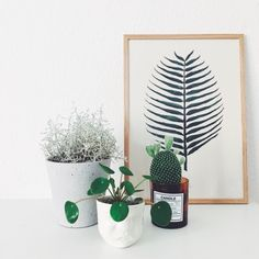 Moodcup som pilea passer #Mood #cup used as a vase #Livink