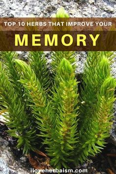 I was looking for some ways to improve my memory naturally I found an article which showed the 10 best herbs which will enhance memory function.