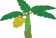 Cricut Treklens Think Banana Tree Photo - ClipArt Best - ClipArt Best Some homeowners enjoy the vibr Tree Drawing For Kids, Palm Tree Drawing, Cartoon Banana, Photo Clipart, Abstract Tree Painting, Jungle Art, Tree Clipart, Pine Tree Tattoo, Tree Sketches
